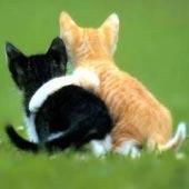 Refranes Sobre Gatos Refranes Tradicionales Y Dichos Populares En